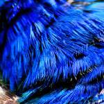 """""""Bird Blue 2"""" by kenart"""