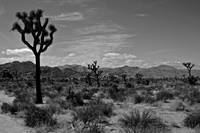 Joshua Tree National Park  03/2006