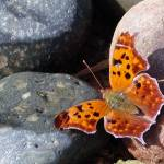 """""""Butterfly on the Rocks"""" by ThePictureMonkey"""