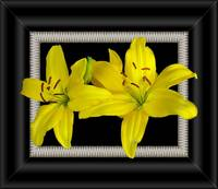 Yellow Lilly Art