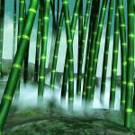 """""""Bamboo Grove"""" by jbmamay"""