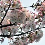 """""""Cherry Tree Expression"""" by LorrieMorrison"""