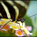 """Butterlfy closeup"" by MKWhite"