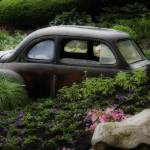 """Rusty Car in flower Bed"" by gwilsonphoto"