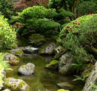 Still waters ~ Japanese garden