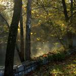 """""""Foggy, Fall Morning   8682"""" by CooperSlay"""