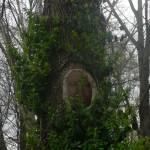 """""""The Last Druid"""" by mrosewerks"""