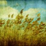 """Whispering Wind hi-res"" by manymuses"
