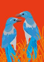 Pair of Florida Scrub Jays
