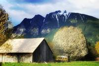 Old Barn In Spring Time