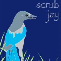 Florida Scrub Jay - blue Art Prints & Posters by Dezine Design