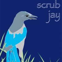 Florida Scrub Jay - blue Art Prints & Posters by Dezine Design