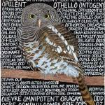 """""""OWL II"""" by sbuschman"""