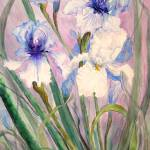 """Blue and White Iris"" by MannellGallery"