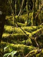 Abstract of Moss and Woods