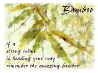 bamboo amazing card
