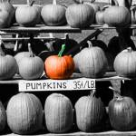"""Pumpkins for Sale"" by PhotoTowne"