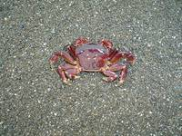 Picture Perfect Young Crab