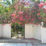 """Bougainvilleas on Hacienda Wall, Mismaloya Village"" by LisaAndres"