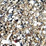 """Beach Shells and Stones"" by PhotoArtbyDan"