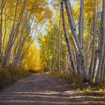 """Last Dollar Road Near Telluride, Colorado, Autumn"" by FallingSilver"