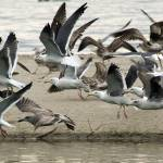 """A flock of seagulls"" by eyalna"