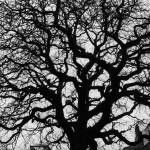 """""""Tree of Knowledge"""" by Sawrah"""
