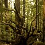 """Polished Deadwood Root"" by FelipeDutra"