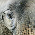 """""""Thai Elephant"""" by jenfu"""