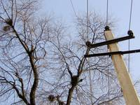 the twigs,the nests and the electric pole