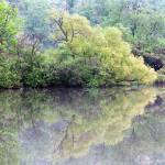 """Spring Reflection"" by joelpatrick"