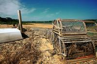 Cape Cod Orleans Lobster Trap Nauset Heights