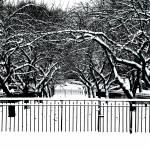 """Carl Shurz Park Winter Landscape"" by BrianMadden"