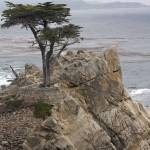 """Lone Cypress 2"" by GregWoodhouse"