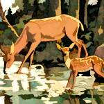 """Fawn & mom by the numbers"" by Pauljs"