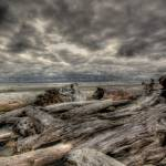 """Driftwood HDR"" by AhrenD"