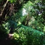 """""""Wild Forest"""" by DavidG"""