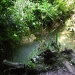 """""""Wild Stream"""" by DavidG"""