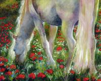 White Stallion Grazing In Poppy Field