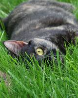 Panther In the Grass
