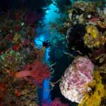 """Rich soft corals on Ducomi Pier"" by sbailliez"