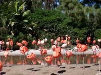 Gorgeous Flamingos