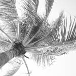 """""""Wind in the Palm"""" by gjw"""