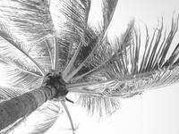 Wind in the Palm