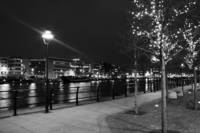 Liffey Christmas trees