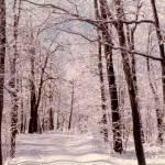 """Snow Scene"" by memoriesoflove"