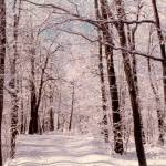 """""""Snow in the Woods"""" by memoriesoflove"""