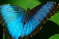 Butterfly No. 12, May 2008