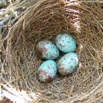 """birds nest"" by fotogenics"
