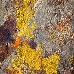 """""""Golden Symbiosis"""" by Rockhound"""